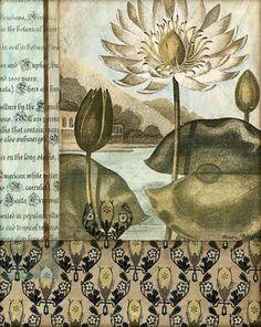 Elegant Water Lily I