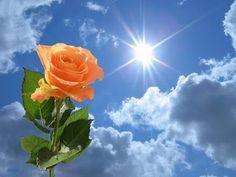 Todas as coisas, na Terra, passam…  Os dias de dificuldades, passarão…  Passarão também os dias de amargura e solidão…  As dores e as lágri...