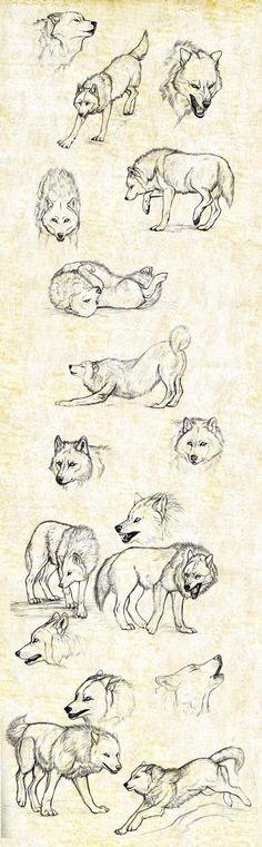 Leuke wolventekeningen