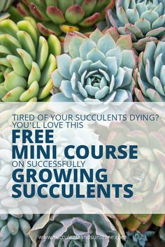 This was amazing! I learned so much from this mini course on growing succulents! Plus, it came with free ebooks too!