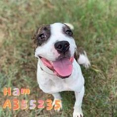 Conroe Texas, Cat Ages, Feline Leukemia, Montgomery County, Save Animals, Animal Control, Baby Puppies, Australian Cattle Dog, Pitbull Terrier