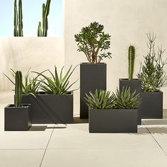 X blox low galvanized charcoal planter. Charcoal planter squares up sleek and modern. Protected for indoor and outdoor settings, matte-finished galvanized steel plays up refined industrial to dramatic effect. Galvanized Planters, Black Planters, Modern Planters, Outdoor Planters, Garden Planters, Planter Pots, Galvanized Steel, Resin Planters, Planters Around Pool