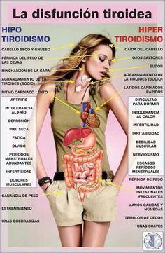 Síntomas de la disfunción tiroidea: hipotiroidismo e hipertiroidismo Health And Nutrition, Health And Wellness, Health And Beauty, Health Fitness, Health Care, Examen Clinique, Thyroid Health, Health Remedies, Healthy Tips
