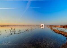 Marjal reflections - Marjal de la albufera de Valencia, en enero