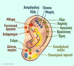 What Your Ears Reveal About Your Existing Health Conditions & Predict Future Health Issues Ear Reflexology, Human Ear, Musculoskeletal System, Inner Ear, Acupuncture Points, How To Relieve Stress, Health And Beauty, Health Tips, Health And Wellness