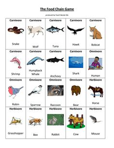 Worksheet Food Web Worksheet High School exploring nature and student centered resources on pinterest food chain game pdf