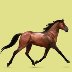 Name: Reeses Affix: None Comments: he's a French Trotter; Father of Pudd'n and Peanut (who is not mine)