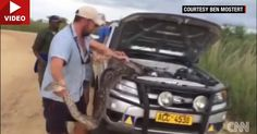 Apparently, Pythons Hiding In Engine Bays Is A Real Problem #Ford_Videos #Offbeat_News