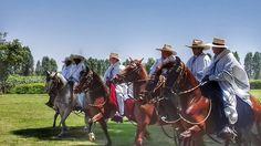 Chalanes y sus caballos de paso peruano