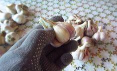 Prelucrarea și păstrarea usturoiului în borcane! - Sfaturi pentru casă și grădină Garlic, Fish, Meat, Vegetables, Pisces, Vegetable Recipes, Veggies