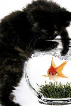 French Signs, Catfish, Cool Names, Cat Fishing, Animals, Animales, Animaux, Animal, Animais