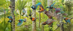 Art by the Sea art gallery specializes in fine NZ arts and crafts, with a huge range of original, fine New Zealand and Maori arts and crafts. Animal Paintings, Oil Paintings, Mural Art, Murals, Wall Art, Bird Artists, New Zealand Art, Nz Art, Bird Illustration