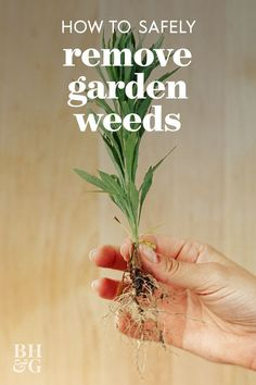 Use our garden weed guide to identify garden weeds by appearance and learn how to quickly remove weeds safely. Get your garden to be the best it can be! #gardening #gardenideas #gardenweeds #howtogetridofweeds #bhg