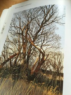 A brilliant capture of a tree by Robert Bolton from his book Texture & Detail in watercolor