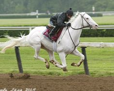 """A lovely rare white japanese thoroughbred race horse named """"White Vessel"""" Beautiful Horses, Animals Beautiful, Horse Names, Sport Of Kings, Thoroughbred Horse, Racehorse, Horse Photos, White Horses, Albino"""