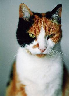 cat 4 by lichtdieb