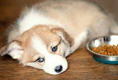 Taking care of dogs is full of its ups and downs. So, here are the 10 most common dog health problems, and how you can help your pet avoid them. Dog Grooming Shop, Dog Grooming Clippers, German Shepherd Pictures, German Shepherds, Dog Coughing, Top 10 Home Remedies, Baby Kittens, Family Dogs, Dog Pictures