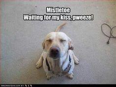 Mistletoe! Waiting for my kiss, pweeze!