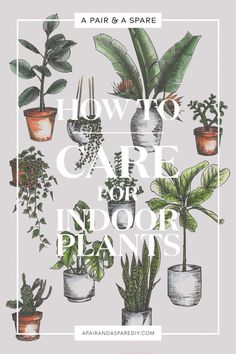 fc72a813e83 we put together a how to care for indoor plants guide
