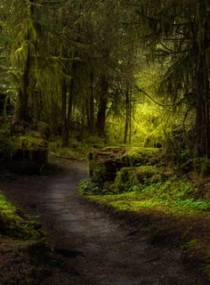 Somewhere only we know (by Kristina Wilson) [forest path]
