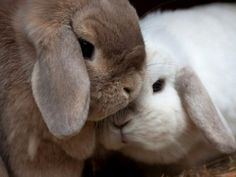 Fluffy bunnies!