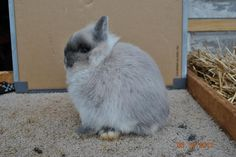 Can't wait to get a neherland dwarf bunny! I miss the ones I used to have!