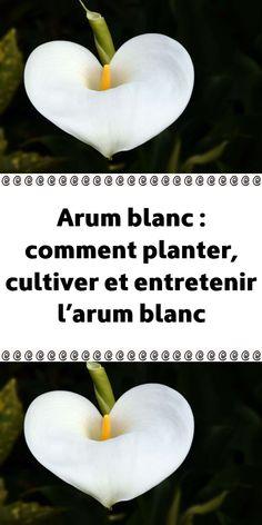 Comment Planter, Flora, Planters, Lily, Fruit, Cubes, Collage, Gardening, Inspiration