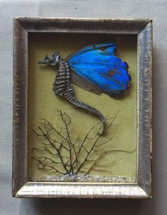 hippocampus  butterfly  in box frame