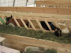 #goatvet says some people find slanted slats means less hay wastage. But any fence-line feeder is good for preventing faecal contamination and parasites
