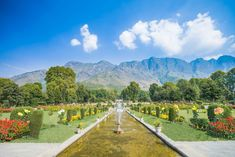 Srinagar is a beautiful place that will make all your travel dreams come to life and you will surely a great time being here with your family.Things to Do Srinagar. Beautiful Stories, Most Beautiful Cities, Kashmir Tour, Local Tour Guides, Srinagar, Paradise On Earth, Travel Companies, Vacation Trips, Beautiful Gardens