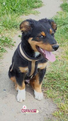 Hunde Foto: Stephanie und Oscar - Frechheit siegt! Hier Dein Bild hochladen: http://ichliebehunde.com/hund-des-tages #hund #hunde #hundebild #hundebilder #dog #dogs #dogfun #dogpic #dogpictures