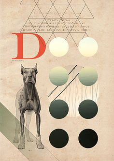 D - D for dog