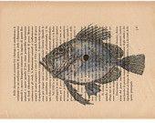 Pag.37, Pesce Sanpietro, stampa in toni acquerello, posizione pagina orizzontale.
