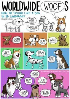 I versi degli animali in tutte le lingue