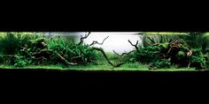 Nature Aquarium inspiration for 100 gal. South American Tank.