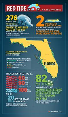 Massive 'Red Tide' Threatens Florida Beaches - NBC News.com