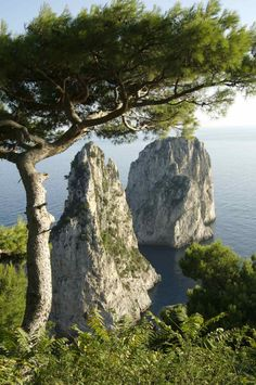 this tree. this view. these rocks. love. (capri) #travelcolorfully