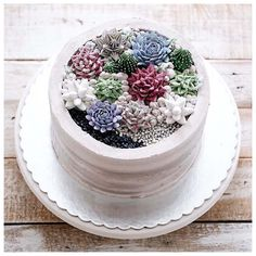 Buttercream terrarium in the pot 😍😍 Fancy Cakes, Mini Cakes, Cupcake Cakes, Cake Cookies, Cactus Cupcakes, Cactus Cake, Gorgeous Cakes, Amazing Cakes, Pasta Cake