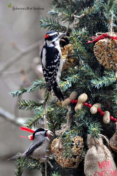A Christmas tree just for the birds ! Source: http://rebeccasbirdgardensblog.blogspot.com/2014/12/a-christmas-tree-for-birds.html?m=1 / #birdfeeding #birdfeeder #winter