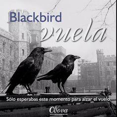 Blackbird. EKHOS Británicos I. Febrero 26, 2015. Temporada EKHOS.