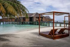 Maldives Vacation, Maldives Resort, Maldives Water Villa, Swimming With Whale Sharks, Overwater Bungalows, Island Nations, Open Water, Underwater World, Day Trip
