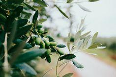Olives Image, Gel Douche Bio, Flüssiges Gold, Infused Oils, Olive Tree, Fermented Foods, Mediterranean Diet, Superfood, Home Remedies