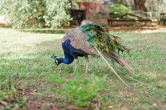 AvaTravis_MagnoliaPlantation_PriscillaThomasPhotography_SneakPeek_02