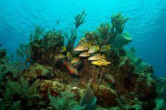 Caribbean Islands: Cayman Brac, Cayman Islands, Photo 4 of 7 (Condé Nast Traveller)