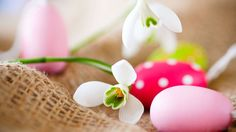 Pink easter eggs with snowdrop Happy Easter Wallpaper, Holiday Wallpaper, Easter Bunny Eggs, Easter Food, Easter Backgrounds, Happy Easter Day, Easter Pictures, Easter Celebration, Easter Eggs
