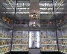 Hunterian Museum, London - An absolutely fascinating place full of scientific wonder!