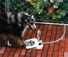 (Dog) Push Pedal Water Fountain $24...could I train my cat to use this Tony loves water