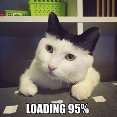 Top 40 Funny Cat Memes #Funny #cats Read more in http://lovablepawsandclaws.com/