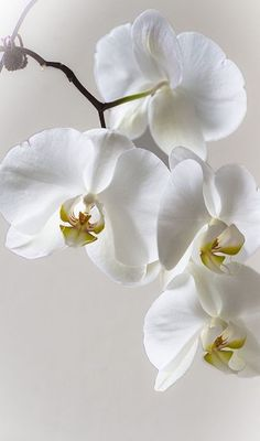 Love orchids.