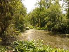 Beaver Marsh. Cuyahoga National Park---OH.
